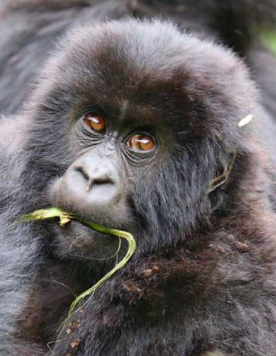 enjoy-life-vacations-adventure-travel-gorilla